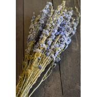 Dried Light Blue Larkspur Flowers For Sale