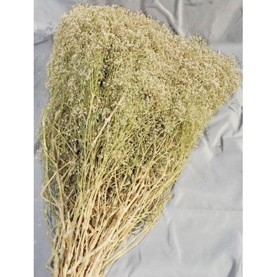 Dried Baby's Breath Natural - Dried Gypsophila