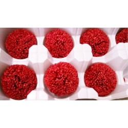 Preserved Chrysanthemum - 8 per Order - Colors: Red-Green