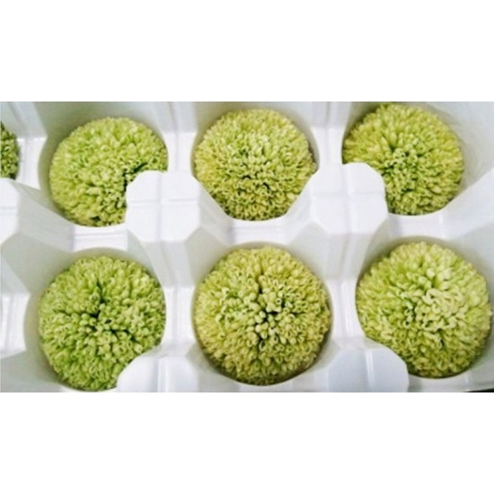 Preserved Chrysanthemum - 8 per Order - Colors: Red-Green