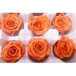 Preserved Roses - 8 per Order - Colors: Purple, Yellow, Orange