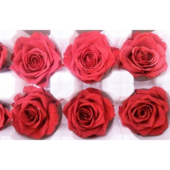 Preserved Roses - 8 per Order - Colors: Red - White