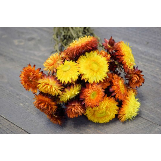 Dried Strawflowers Bouquet - Sunset