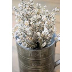 Rare Dried White Lavender Bunch