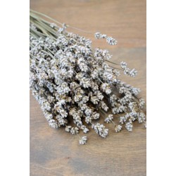 Rare Dried White Lavender Bunch
