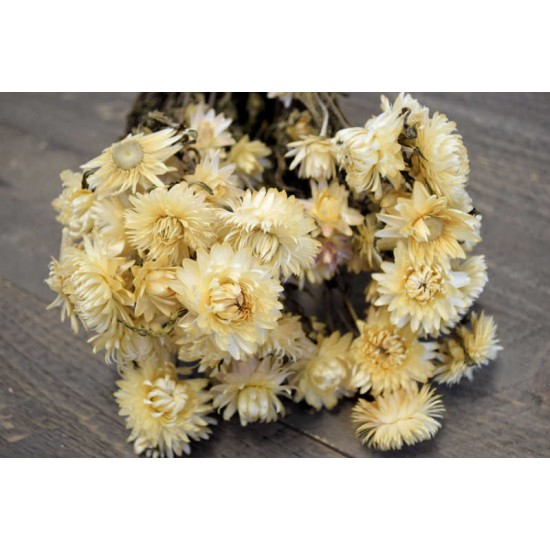 Dried Strawflowers Bouquet - White (neutral)