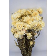 Dried Strawflowers Bouquet - White (neutral)