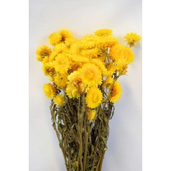 Dried Strawflowers Bouquet - Yellow