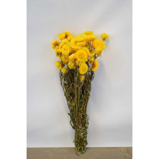Dried Strawflowers Bouquet - Yellow