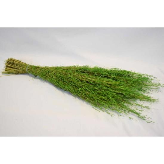 Dried Briza Quaking Grass
