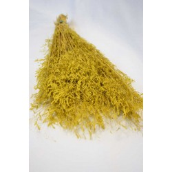Dried Briza Quaking Grass