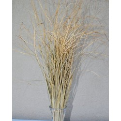 Dried Bear Grass - Decorative