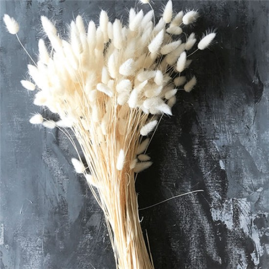 Dried Bunny Tails Grass - Bleached