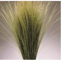 Dried Dune Grass - Natural