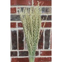 Dried Fan Grass - Arrow Grass