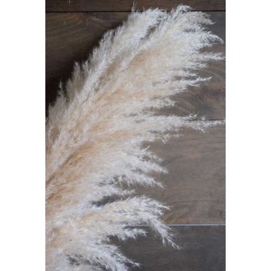 Dried Ornamental Pampas Grass - Feather Stem