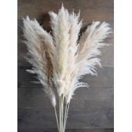 Dried Ornamental Pampas Grass - Feather Stem