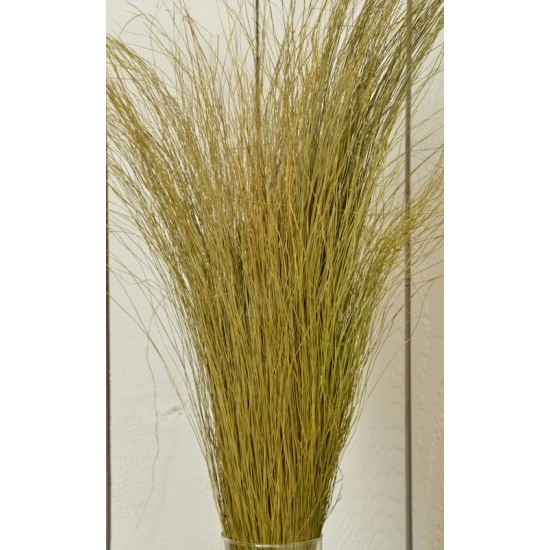 Fountain Grass - Dried Fountain Grasses