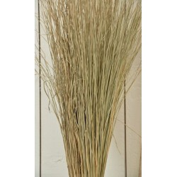 Meadow Grass - Meadowgrass, Meadows Grasses