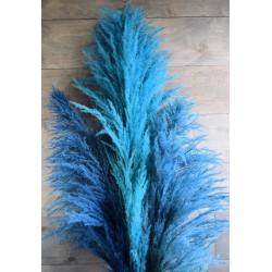 Dried Pampas Grass - Blue Color