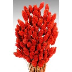 Dried Phalaris Grass