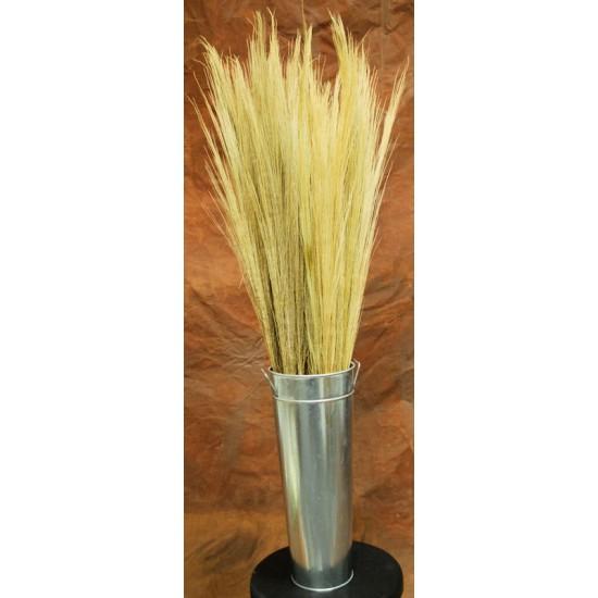 Dried Tamboo Grass