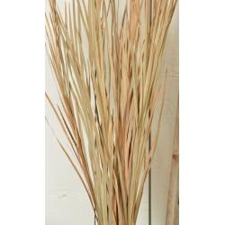 Ornamental Wild Grass (Dried)
