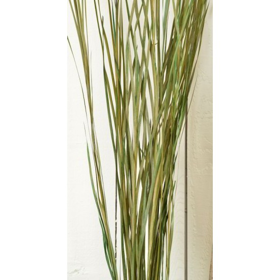 Ornamental Wild Grass (Dried)
