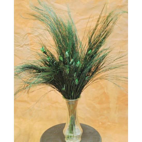 Bell Reed Grass - Nut Grass Preserved