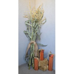 Dried Corn Stalk Bundle