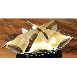 Dried Agave Leaves - Decorative