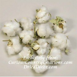 Cotton Bolls (Natural Cotton Balls)