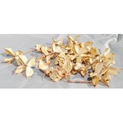Decorative Cotton Pods (Petals, Brackets)
