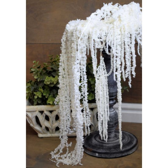Hanging Amaranthus Preserved Bleached - Dried