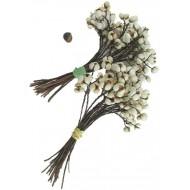 Tallow Berries - Short Stem - TallowBerries Dried