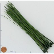 Long Pine Needles - Pine Straw