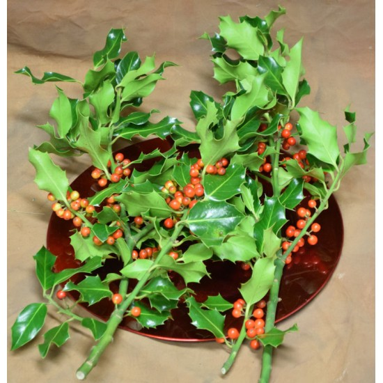 Preserved Holly Branches