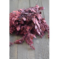 Preserved Seeded Eucalyptus Branches - Colors
