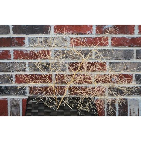 Thornless Tumbleweeds