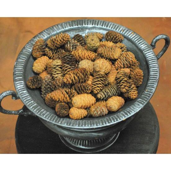 Black Hills Spruce Cones - Small Cones