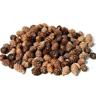 Black Spruce Cones - Small Cones