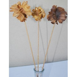 Dried Butterfly Pods - Stemmed