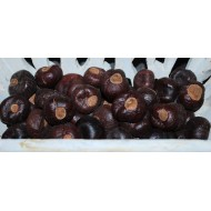 Horse Chestnuts - Large/Small Size Hourse Chest Nuts
