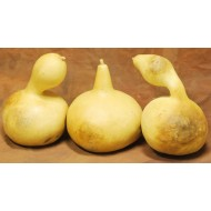 Dried Gourds - Extra Large Size