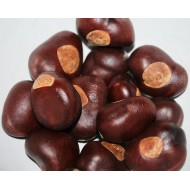 Buckeye Nuts - Large/Small Size Buckeyes Nuts