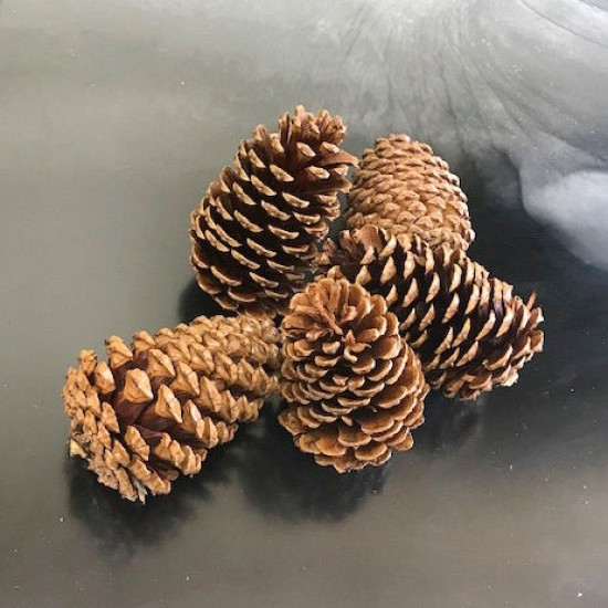 Dried Pinecones Medium Size 3-4 inch