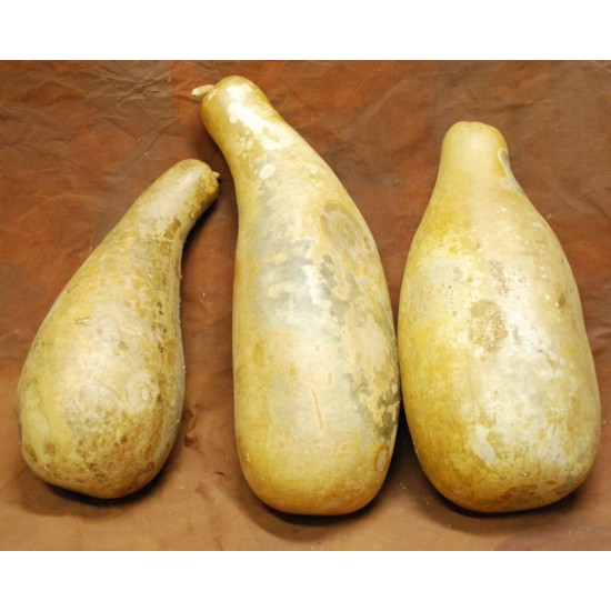 Dried Gourds - Jumbo Size