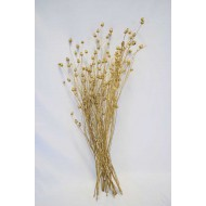 Dried Centaurea Pod Bunch - Gold