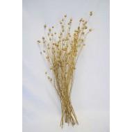 Dried Centaurea Pod Bunch - Gold