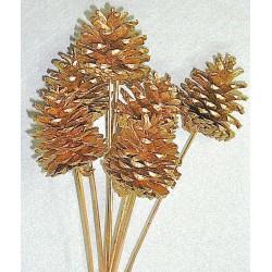 Gold Stemmed Ponderosa Pinecones